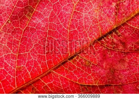 Close-up Photo Of Autumn Leaves. Leaf Texture. Macro Photo