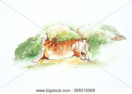 Dog Corgi. Watercolor Drawing Of Corgi Running On Green Grass. Illustration Of Corgi On The Green Ba