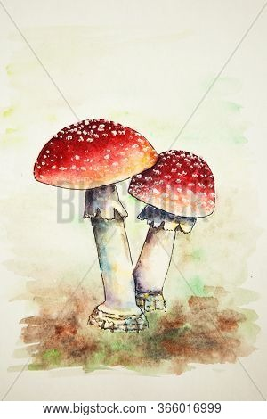 Watercolor Of Red Fly Agarics. Poisonous Toxic Mushrooms On Green And Brown Background. Handmade Wat