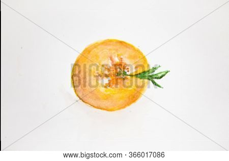 Watercolor Drawing Of Orange Isolated On White Background. Illustration Of Orange.