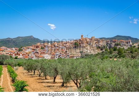 Vineyards And Fruit Plants Near Pinell De Brai, Catalonia, Spain