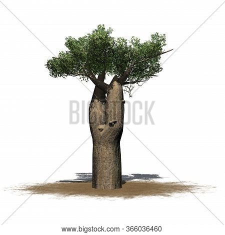 Madagascan Baobab Tree On A Sand Area - Isolated On White Background - 3d Illustration