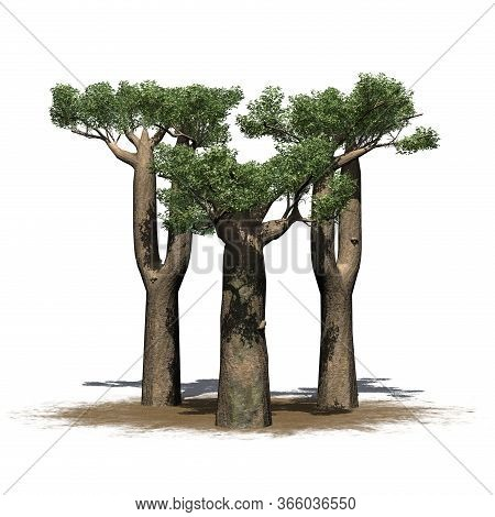 A Little Group Of Madagascan Baobab Trees On A Sand Area - Isolated On White Background - 3d Illustr
