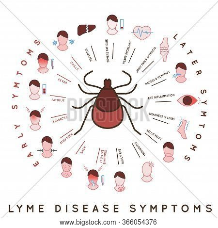 Protect Yourself Against Ticks. Lyme Disease Symptoms Poster. Human Skin Parasite. Danger For Health