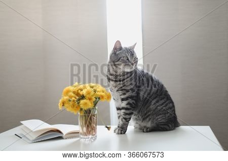 Cat Portrait. Cute Cat Indoor Shooting. Home Pet Cute Kitten Cat With Flowers Close Up Photo. Funny