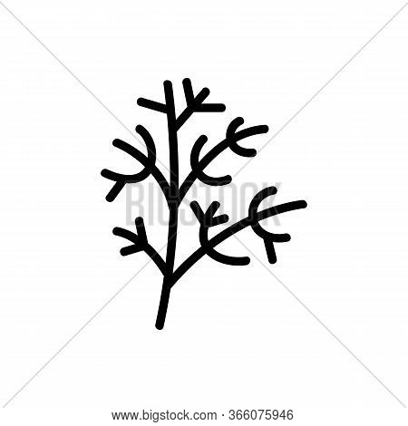 Sprig Of Fennel Icon Vector. Sprig Of Fennel Sign. Isolated Contour Symbol Illustration