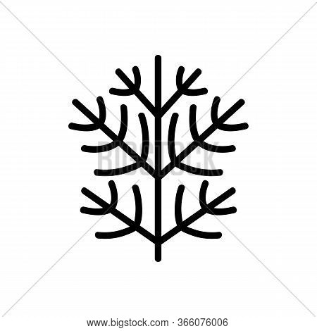 Sprig Of Dill Icon Vector. Sprig Of Dill Sign. Isolated Contour Symbol Illustration