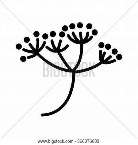 Dill Inflorescence Icon Vector. Dill Inflorescence Sign. Isolated Contour Symbol Illustration