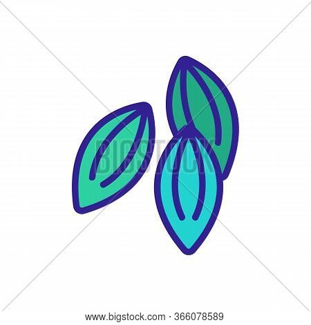 Dill Seeds Icon Vector. Dill Seeds Sign. Color Symbol Illustration