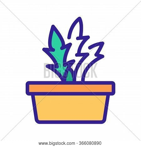 Home Grown Arugula Icon Vector. Home Grown Arugula Sign. Color Symbol Illustration