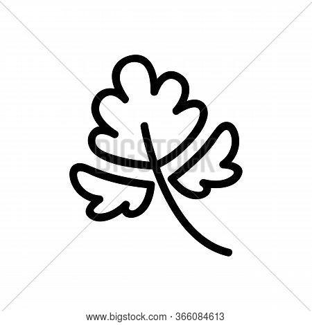 Coriander Annual Plant Leaf Icon Vector. Coriander Annual Plant Leaf Sign. Isolated Contour Symbol I