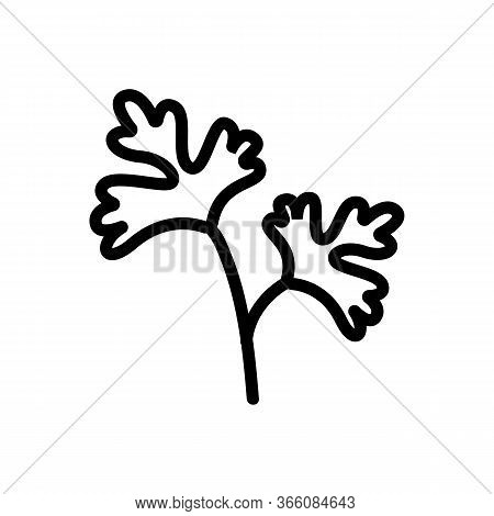 Leaves Of Herbal Coriander Icon Vector. Leaves Of Herbal Coriander Sign. Isolated Contour Symbol Ill