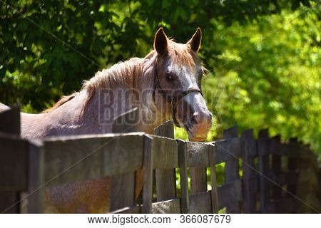 Doleful Gaze From Fenced In Horse