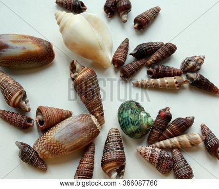 Set Of Small Brawn Seashells On White Background