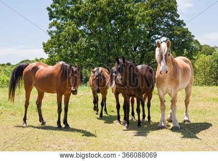 Herd of horses standing in pasture, facing the viewer, on a sunny spring day