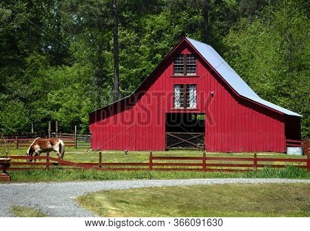 Horse Is Grazing In A Fenced In Pasture In Front Of Red Wooden Barn In Old Washington, Arkansas.