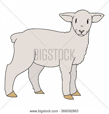 Cute French Farmhouse Lamb Vector Clipart. Hand Drawn Shabby Chic Style Country Farm Kitchen. Illust