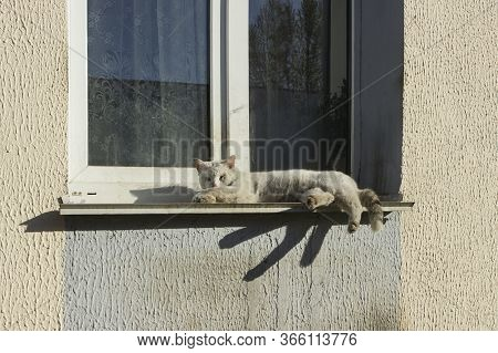 Peeling Dirty Sick Homeless White Cat Lies On The Windowsill Of The Window And Basks In The Sun