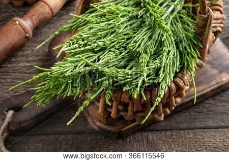 Fresh Horsetail Twigs In A Basket On A Table