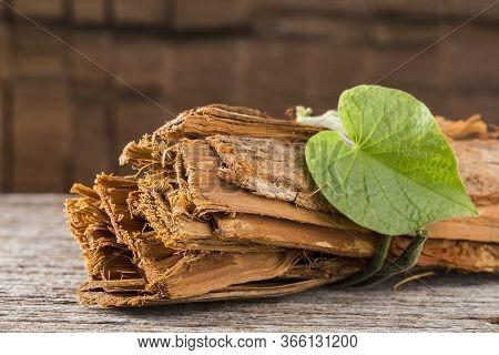 Bark Of Medicinal Plant Cat's Claw, Uncaria Tomentosa