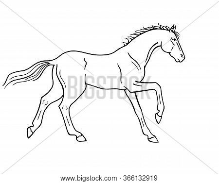Horse Galloping - Vector Linear Picture For Coloring. Outline. Hand Drawing. A Horse In A Canter Cen