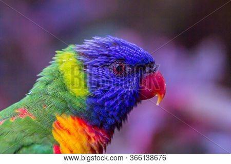 Colorful Parrot Portrait. Parrot Profile. Parrot Head. Parrot Closeup
