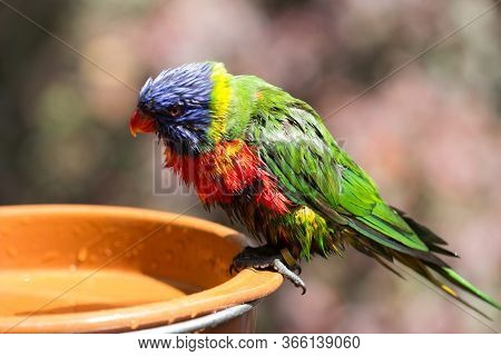 Colorful Parrot Portrait. Parrot In The Zoo. Canaries Islanda
