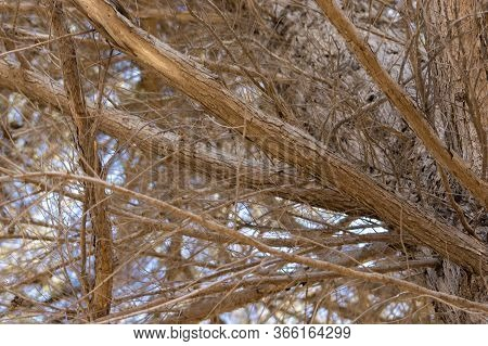 Dry, Leafless Tree Branches And Sticks, With A Blue Sky Visible In The Background.