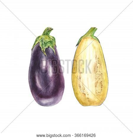 Botanical Vector Watercolor Illustration Of Blue Eggplant Aubergine Whole And Cut On White Backgroun
