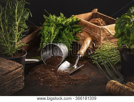 Gardening Hobby Concept With Utensils And Herbs On Dark Background