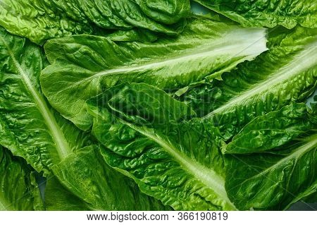 Romaine Lettuce Leaves Texture. Background Of Green Salad Leaves. Fresh Salad Greens Texture. Organi
