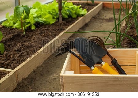 Garden Tools Paw, Rake, Chopper In A Wooden Box In A Greenhouse. Concept Of Vegetable Garden, Agricu
