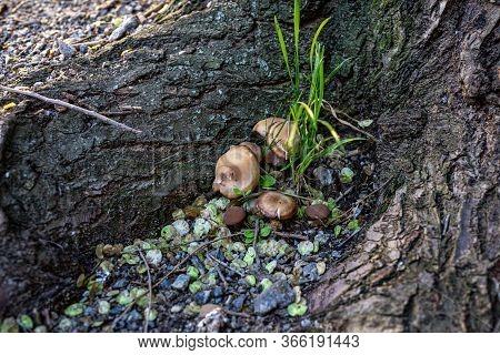 A Family Of Mushrooms Grows Near The Rhizome Of The Tree Everywhere Rubble