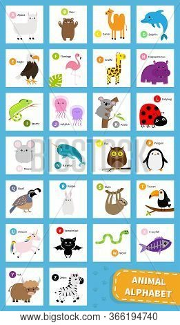 Animal Zoo Abc Alphabet. Cute Cartoon Set. Baby Children Education. Alpaca Llama Bear Dolphin Camel