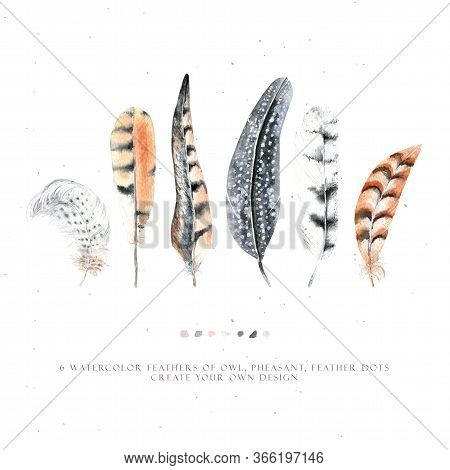 Watercolor Kit With Striped Feathers. Feather Of A Pheasant, Owl And Other Birds. Boho Style. Pastel
