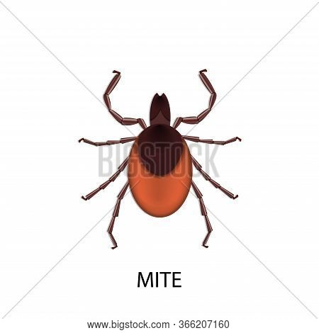 Mite Parasites. Vector Illustration Isolated On White Background. Mite Spider. Mite Allergy. Mite Ep