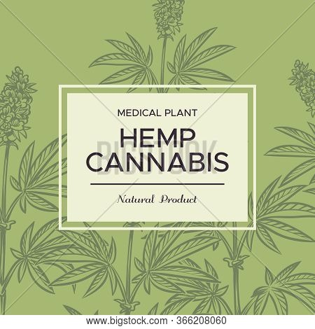 Cannabis Sketch Background. Hemp Branches, Cosmetic And Medical Plant, Marijuana Weed For Joint And