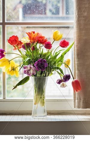 Multicolored Tulips In A Vase, Window On The Background