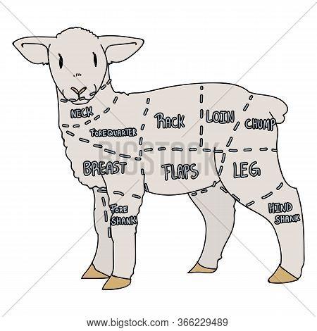 Cute French Farmhouse Lamb Butcher Chart Vector Clipart. Hand Drawn Shabby Chic Style Country Farm K