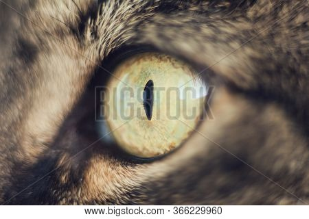 Eye Of The Cat. Cat's Eye, Close Up, Very Close Up Of Cat's Eye