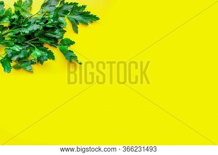 Fresh Parsley On A Green Background. The View From The Top. Free Space. Parsley, Isolated. Juicy Bri