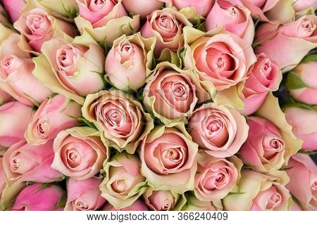 Bright Background Of Natural Pink And Yellow Roses. Delivery Flowers.