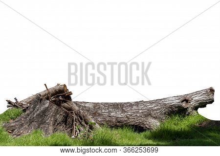 Piece Of Log Wood In The Nature Forest On Green Grass, It Gets Discarded When Wilted. Creative Templ