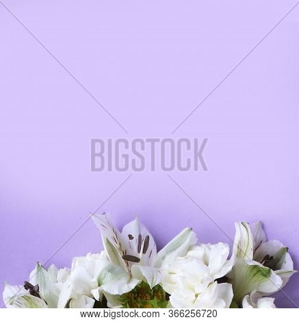 Delicate Floral Arrangement Of White Astrally On A Light Lilac Background. Background For Invitation