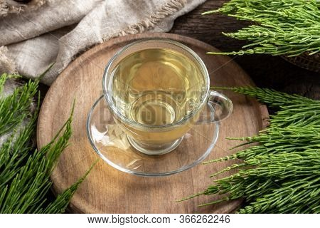 A Cup Of Herbal Tea With Fresh Horsetail Twigs