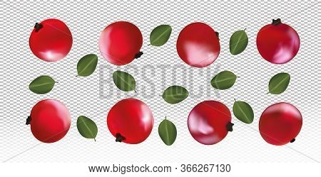 Set Of Red Currant With Leaves On Transparent Background. Fresh Red Currant Fruits Are Whole. Useful