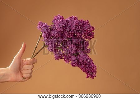 Female Hand With Thumb Up Holds Purple Lilac Brach Isolated On Beige