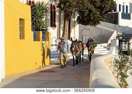 Fira, Santorini, Greece - 20 July 2014: Man In Traditional Greek Clothes Walking With Two Donkeys Fo