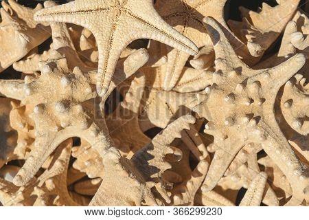 Starfish. Starfish Collection, Top View. Starfish Close-up. Background Of Marine Arthropods.