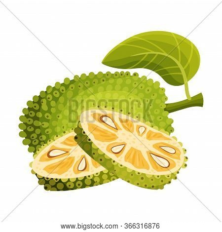 Ripe Bright Whole Jackfruit With Green Seed Coat And Slices Showing Fibrous Core Vector Illustration